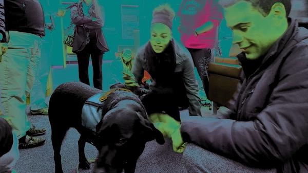 therapydog-nb-120216-1.jpg, therapydog-nb-120216-1.jpg