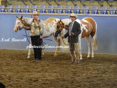 NSW Paint Horse Association