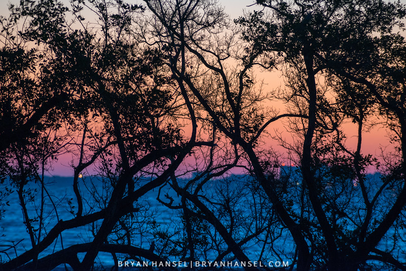 Mangroves at Sunrise