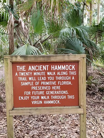 Typically Florida