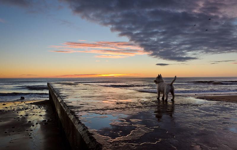 Dawn-Blyth-pier.jpg