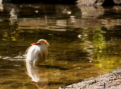 2012-05-17-Vogel Gruga