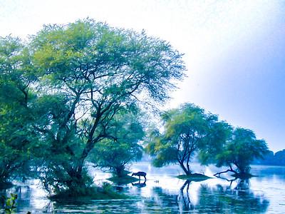 Landscapes India