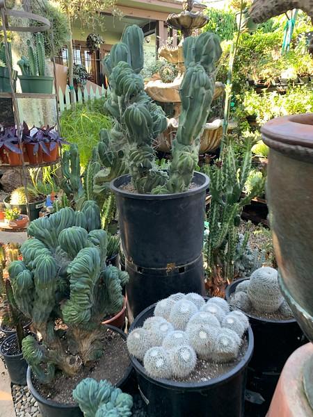 2019.10.26 Mickey Hartigay Plants