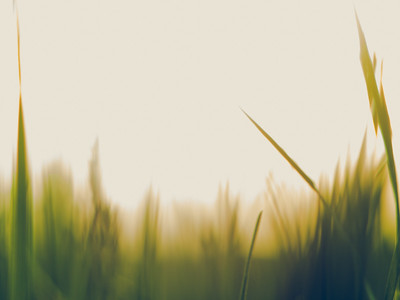 Grasses and Suns