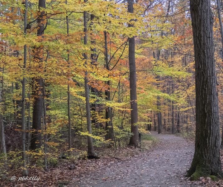 fall color 110517-1.jpg