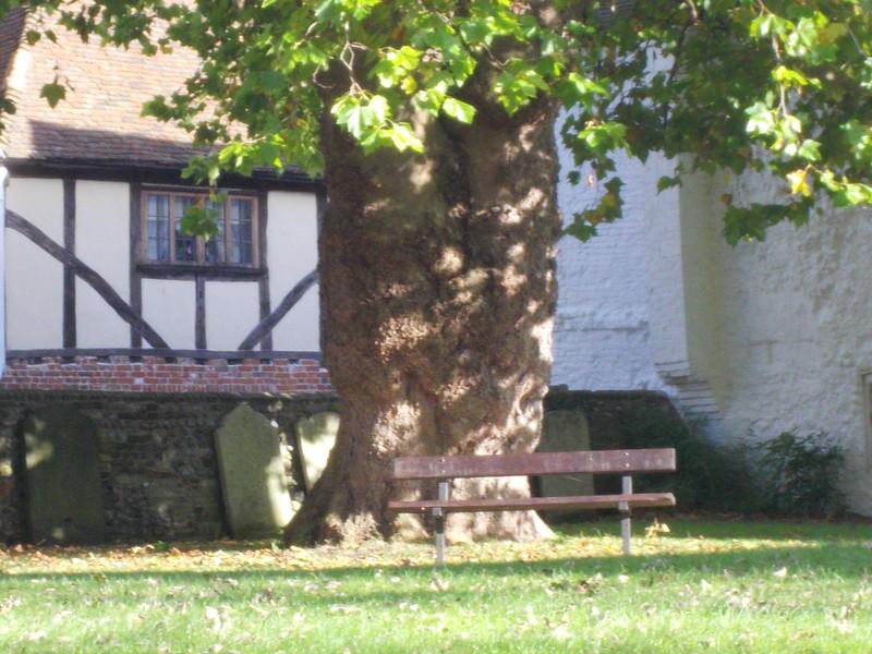 un grand tronc d arbre
