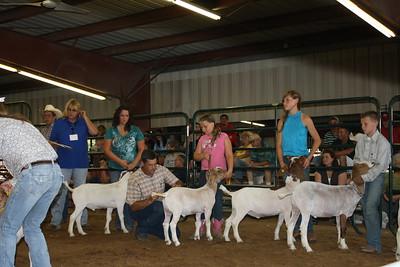 HCF 2011 Market Goat & Lamb Show
