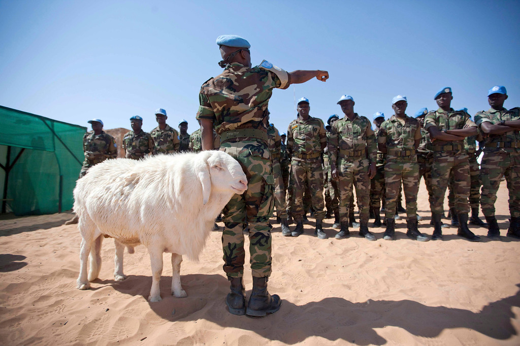 . A sheep passes Senegalese troops standing in formation for the arrival of African Union United Nations mission in Darfur (UNAMID) Force Commander  Lieutenant General Patrick Nyamvumba of Rwanda at the Umm Baru team site February 22, 2012. REUTERS/UNAMID/Albert Gonzalez Farran/Handout