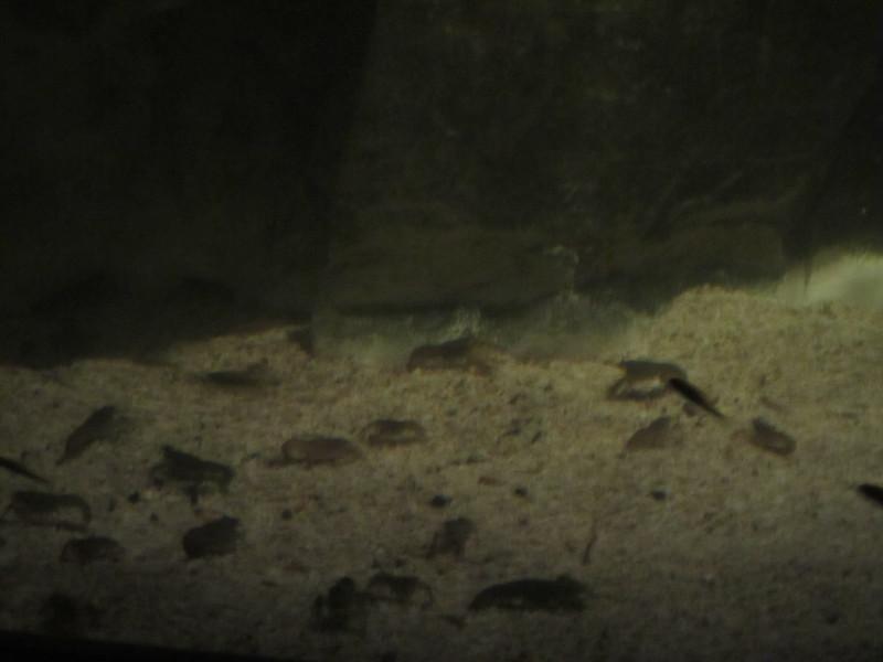 Sydney - Sydney Aquarium-4.JPG
