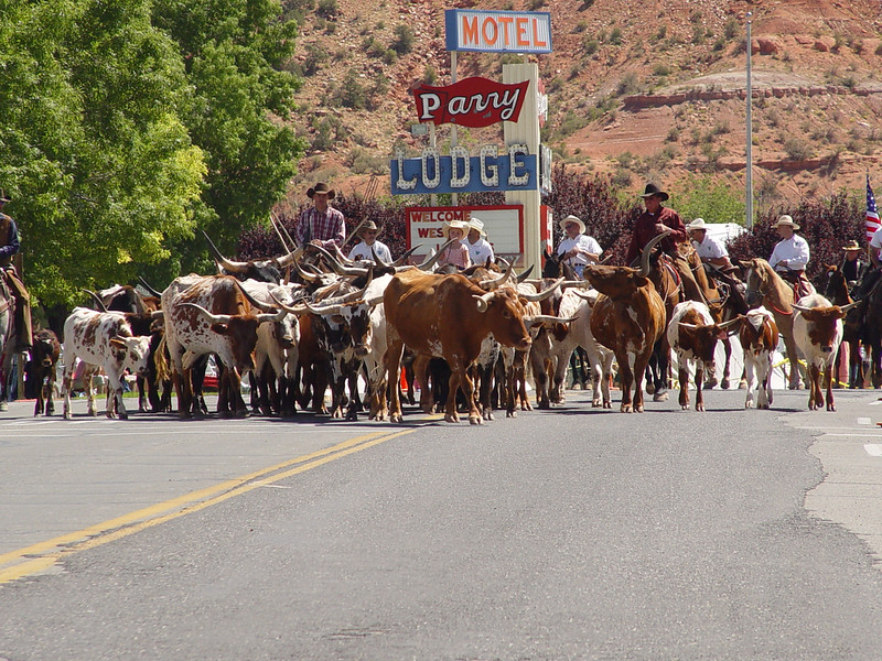 Western Legends - parade cattle drive downtown - KCOT.jpg
