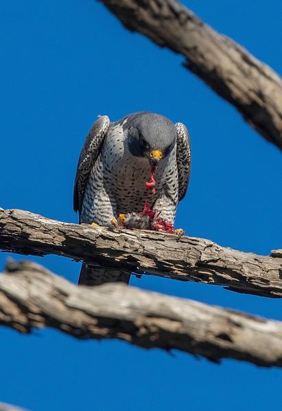 HNBH Birds1-30.jpg