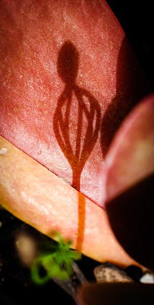 moth-6958.jpg