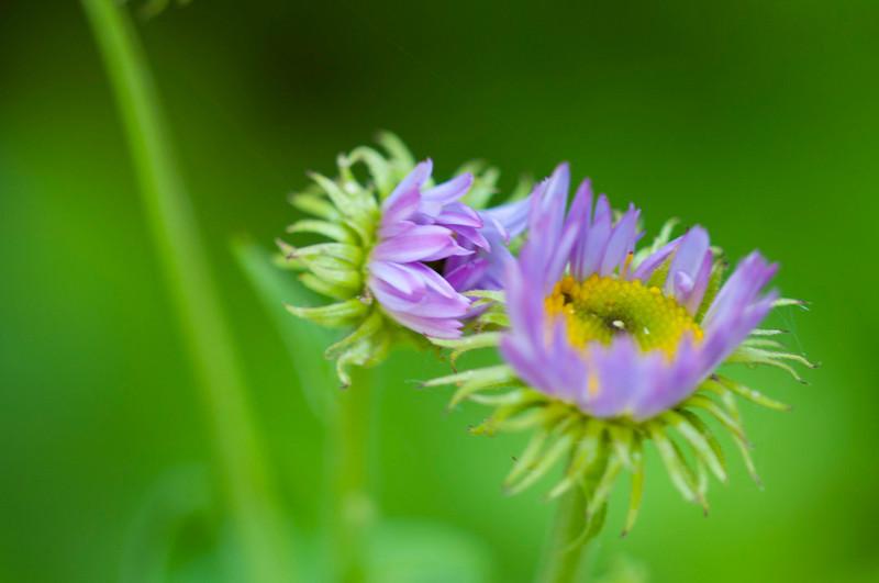 Wildflowers(3).jpg
