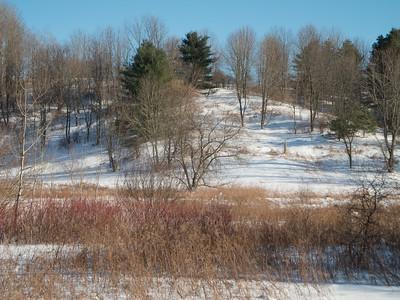 Willis Hill Preserve