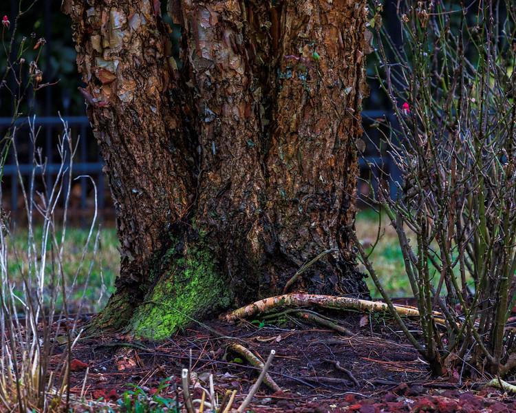 TreeBackyard-007