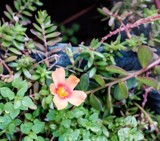 Flower Fuji test DSCF0025-00251.jpg