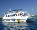 Dolphin Excursions on Hawaii