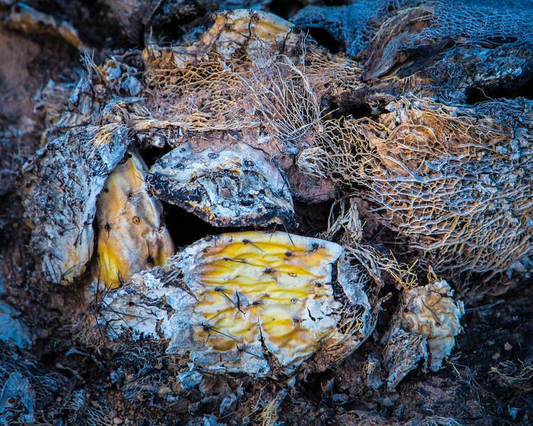 Dead Cactus 1-7-2018c-3147.jpg