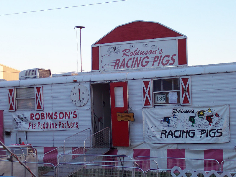 Robinson's Racing Pigs!