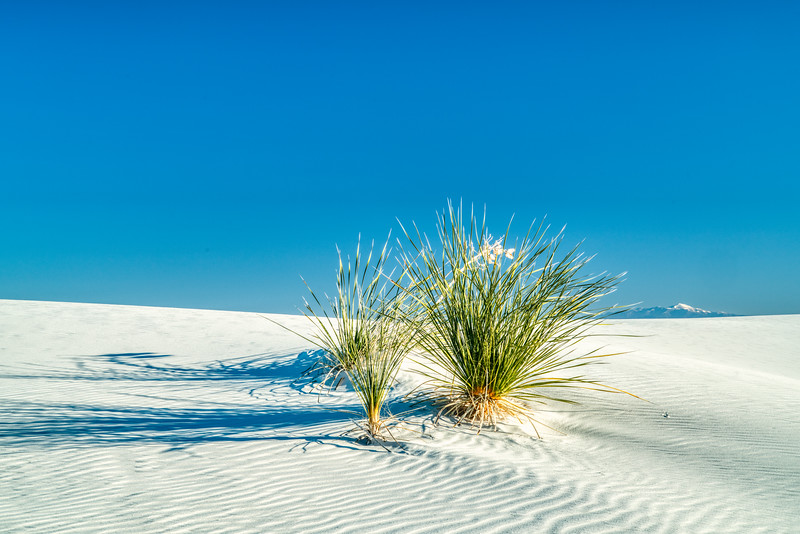 White Sands NP 2020-1.jpg