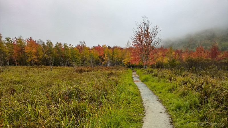 a splash of color, autumn brightness on a gray day