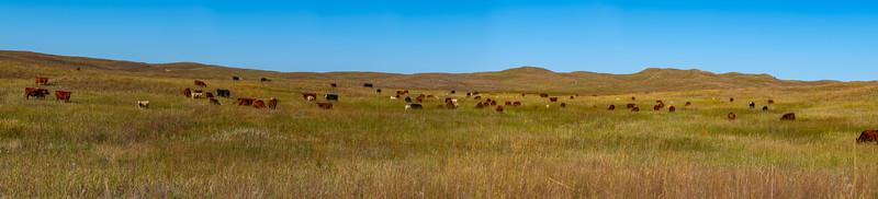 Horn Ranch--8.jpg
