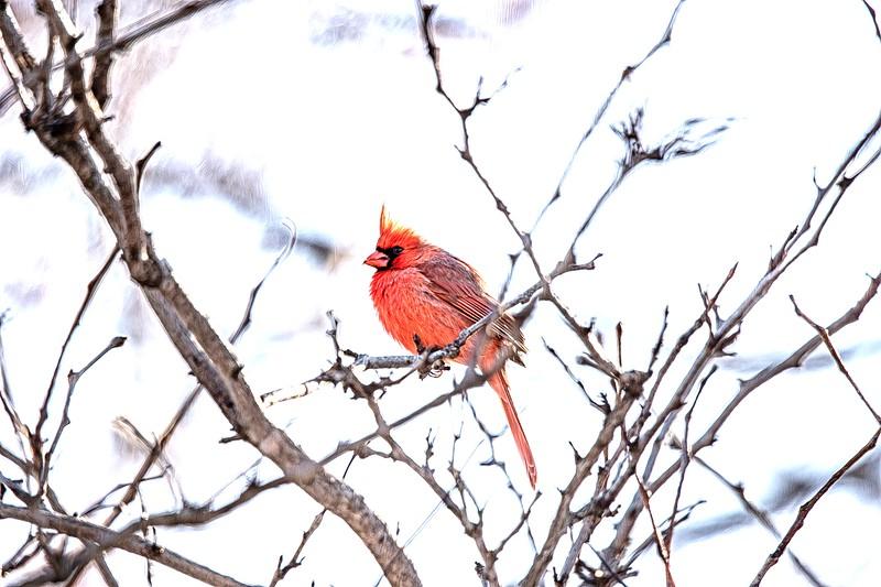 Cardinal Paint.jpg