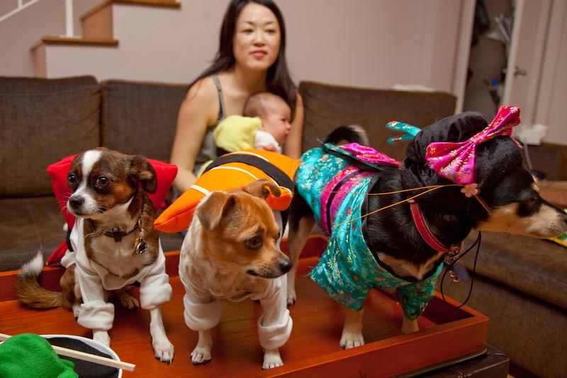 Dog-sushi-halloween-53.jpg