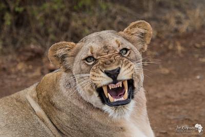 Lions Armoury