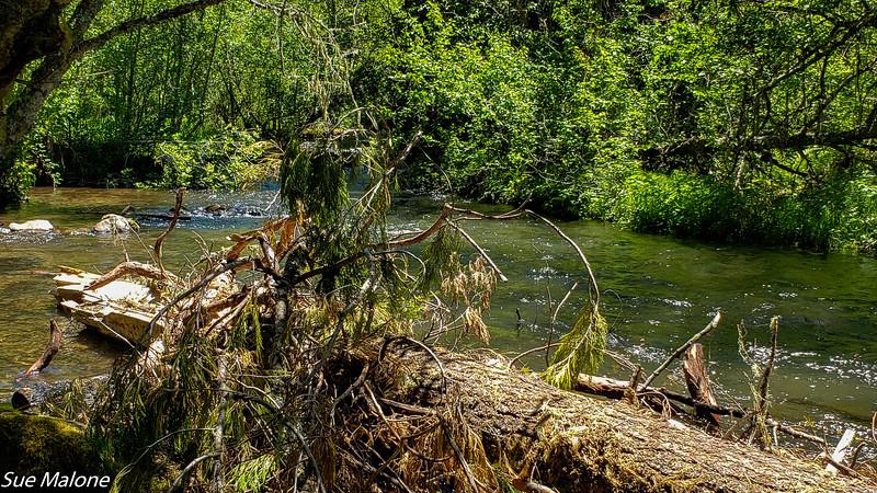 06-13-2019 Kayaking Fish Lake-12.jpg
