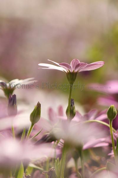 AAA flower 2.jpg