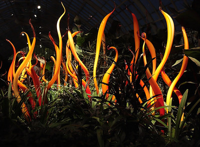 Chihuly Nights At Phipps
