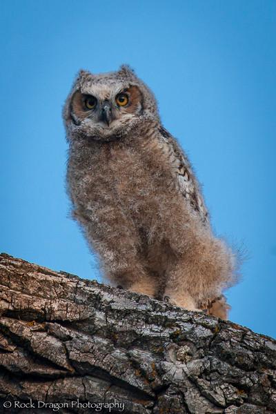 Owl-14.jpg
