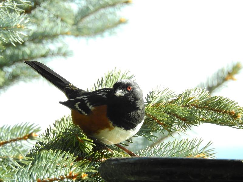 birds (208).JPG