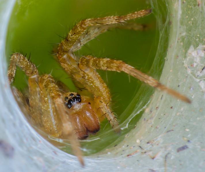 spider_hole.jpg