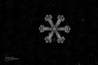 snowflakes-2479.jpg