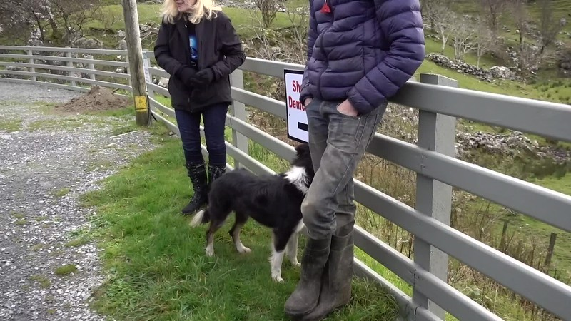 Sheepdog Demo_Ring of Kerry__MAH01958.MP4