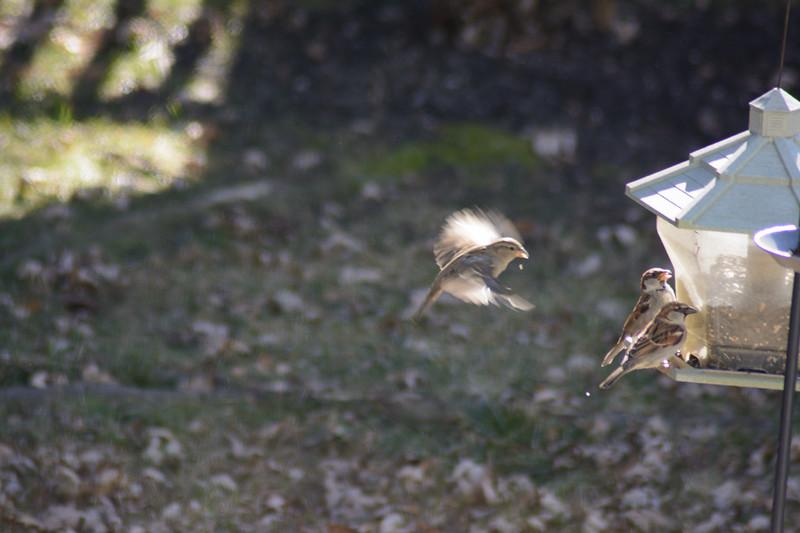 Birds flying-011