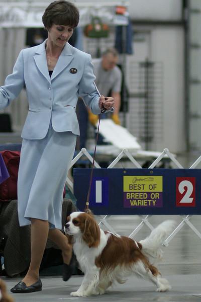 2009 Albany Dog Show
