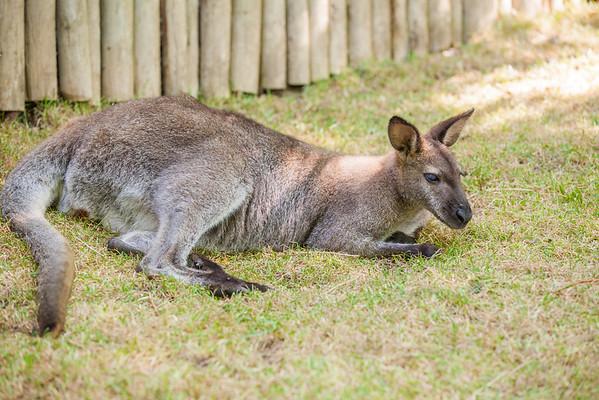 GR Zoo