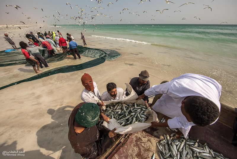 Sardine Season (41)- Dhofar.jpg