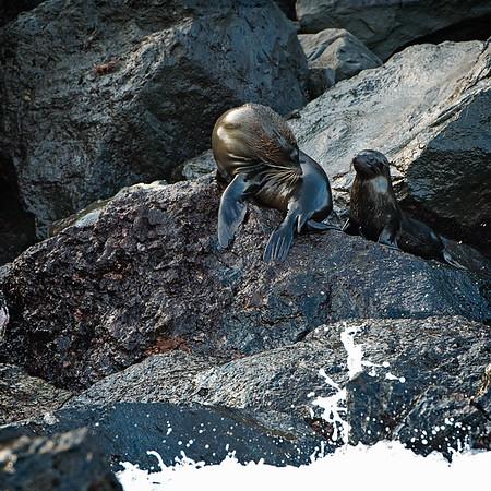 Galapagos_2011