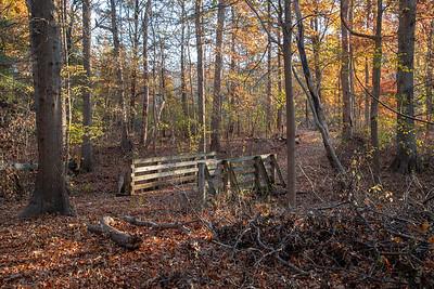 14_Rowe Woods_Autumn_2018