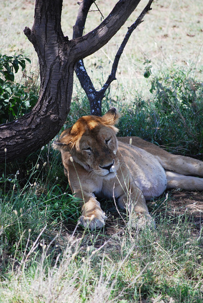 Serengeti (180).JPG