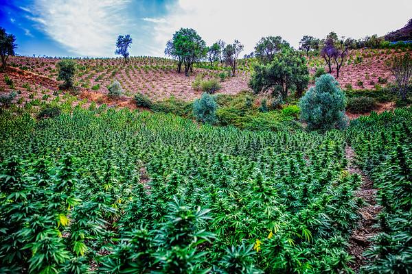 Ketama Morocco , Africa 2016