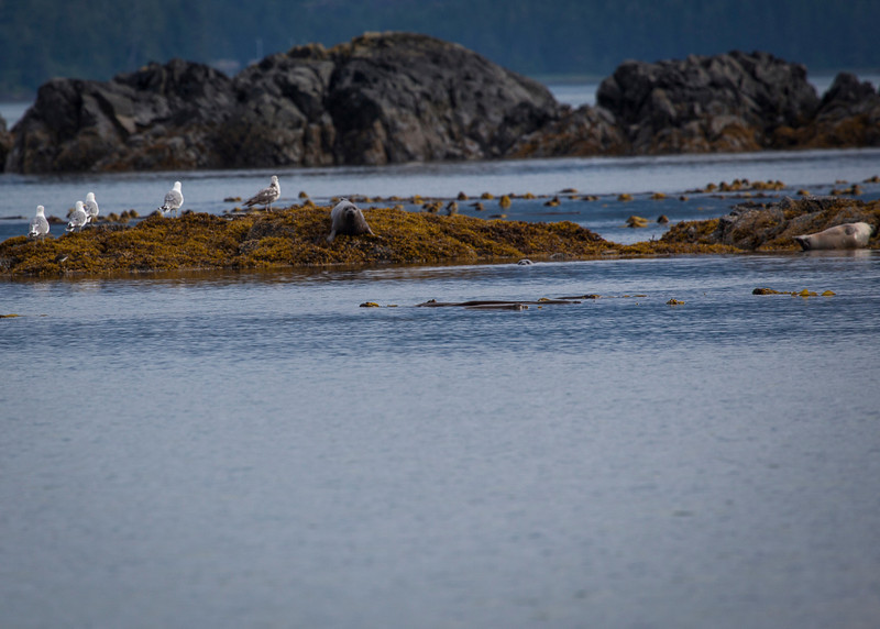 Alaska-119.jpg