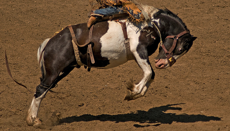 COOMBS RODEO-2009-3639A.jpg