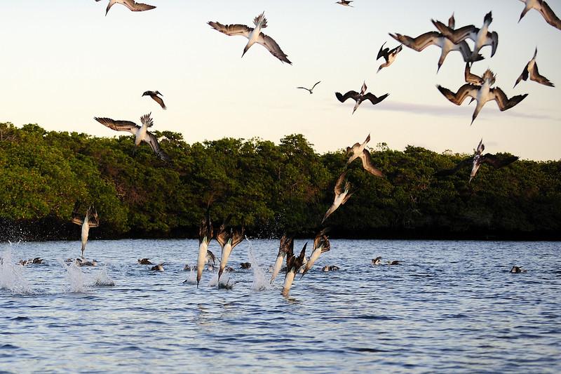 Galapagos Aug 2008 043.JPG