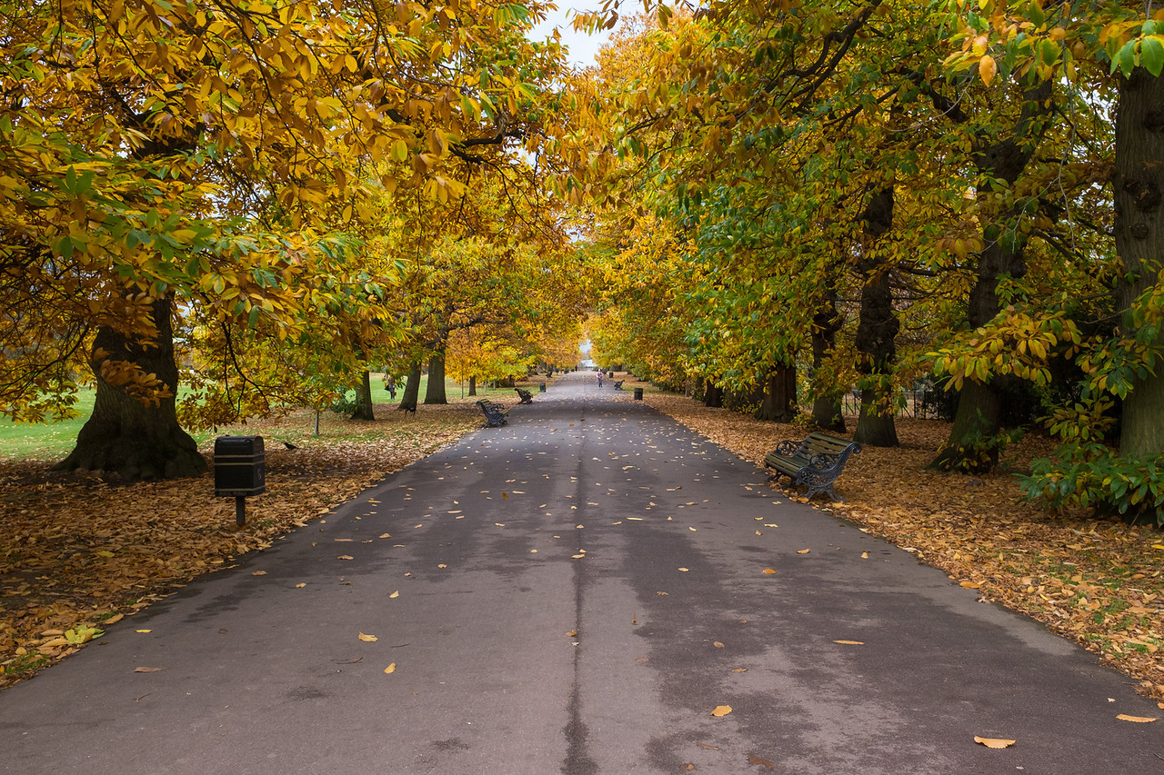 Exploring London - London's last leaves of the season